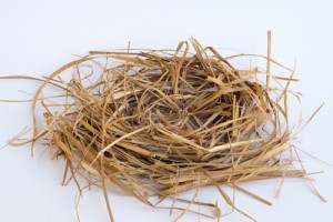 bird-nest-516032526