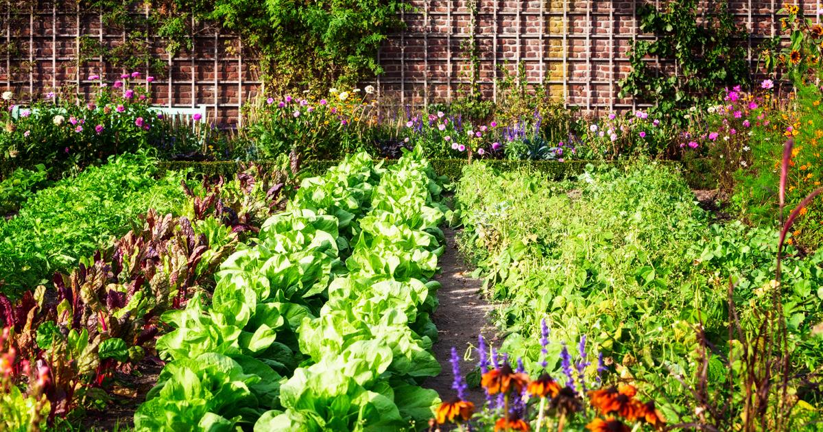 Planning Your Summer Garden