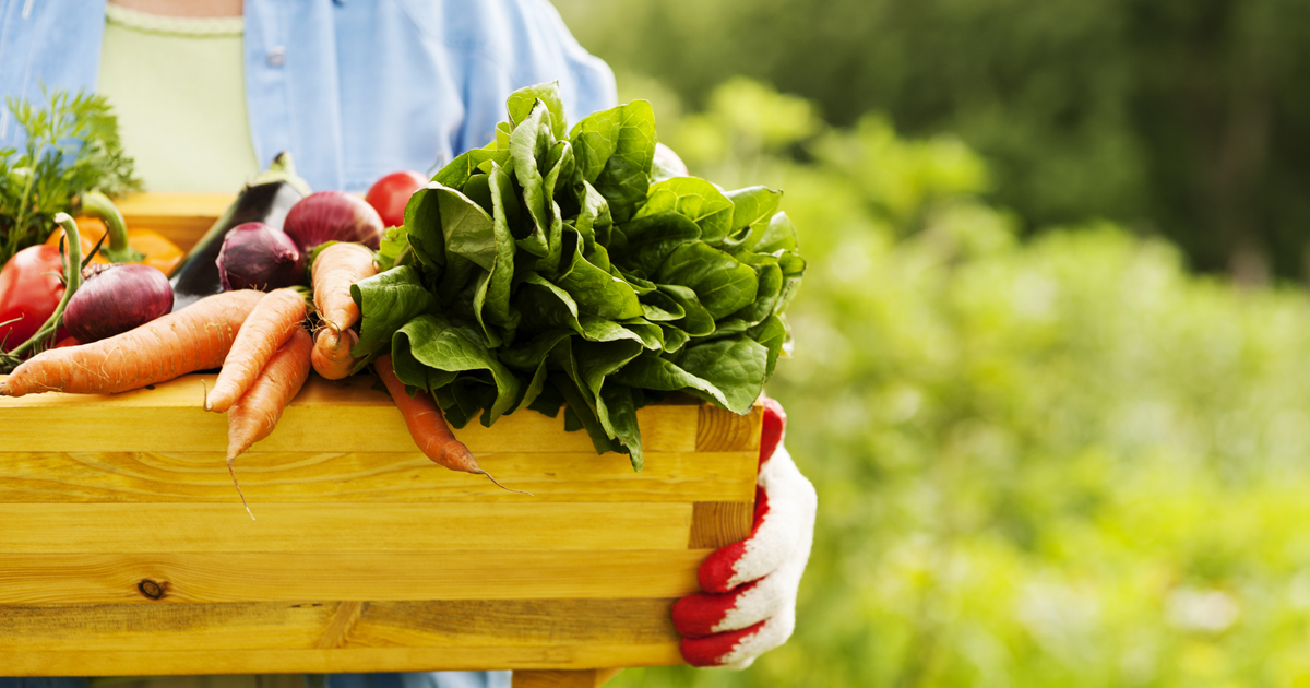 Get More from your Garden: Proper Storage Tips for Fruits and Vegetables