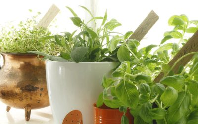 Bring the Outdoors In with a Window Sill Herb Garden